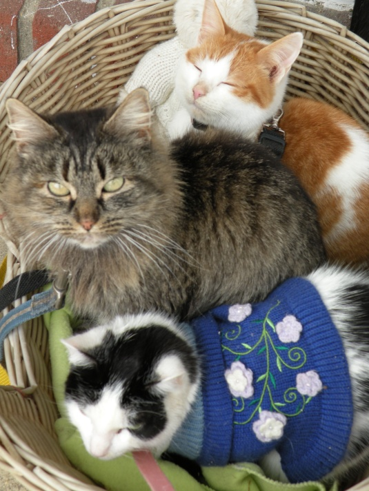 3 kitties in a basket2